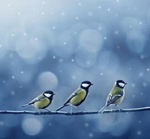 Zvířata si na zimu naperou bříška