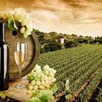 Dvě dvojdecky vína pro zdraví