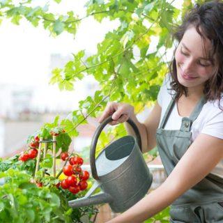 Jak si pěstovat bylinky a zeleninu doma