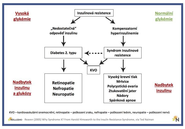 Inzulinová rezistence (převzato od Teda Naimana)