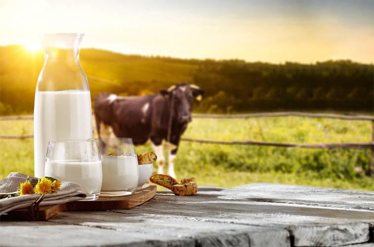 Pasterované, homogenizované, UHT, selské a syrové mléko